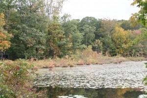 Lonetown Marsh